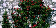 roses-old-building-kras-featured