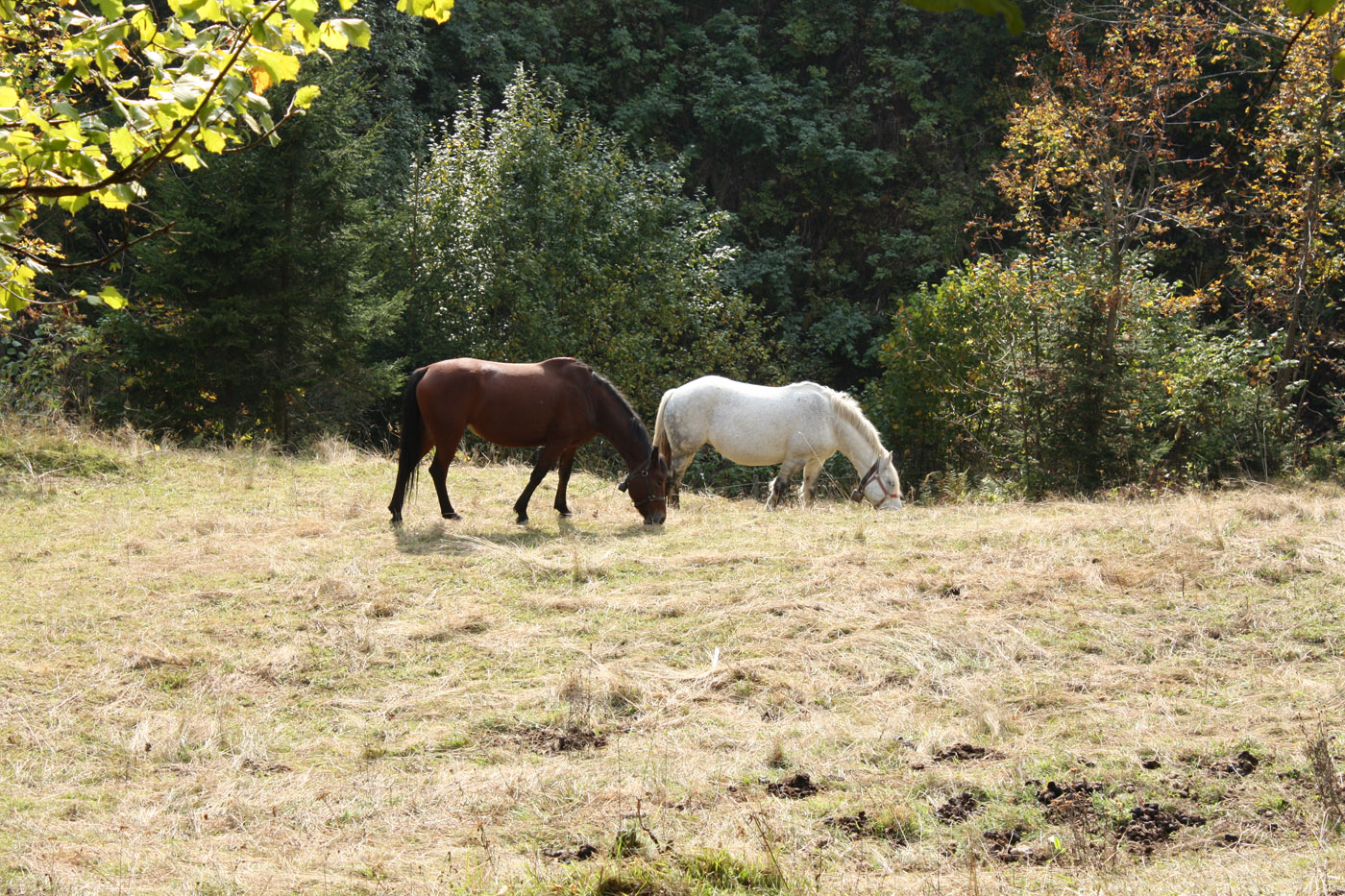 Brown and White Horse on the grass