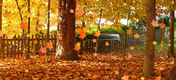 Flash falling leaves