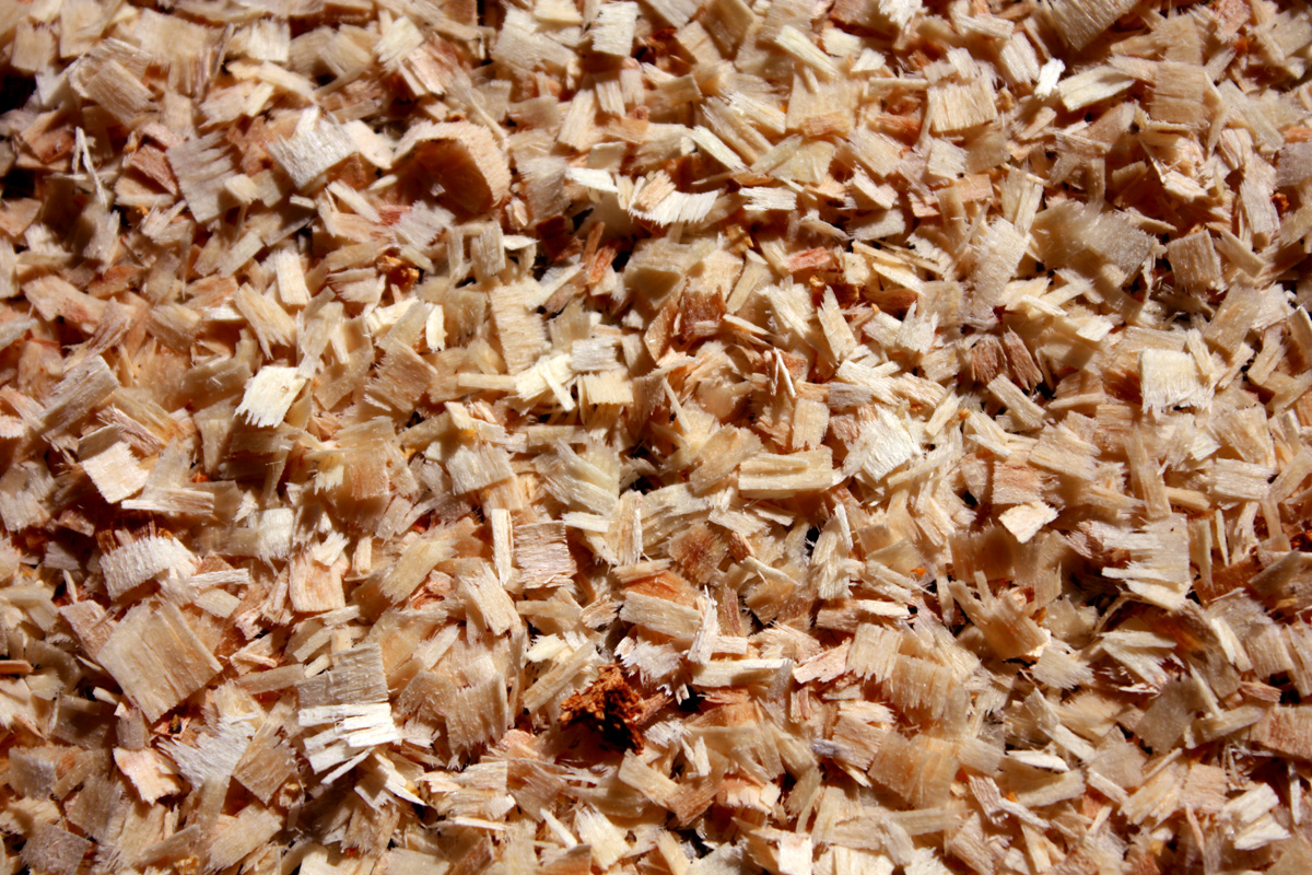 SawDust from ChainSaw