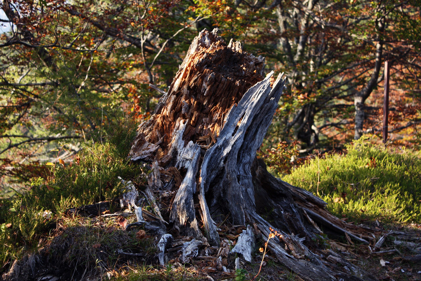 Daily Photo: Retted Stump