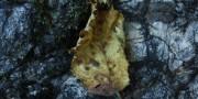 Autumn Leaf on Stone Texutre