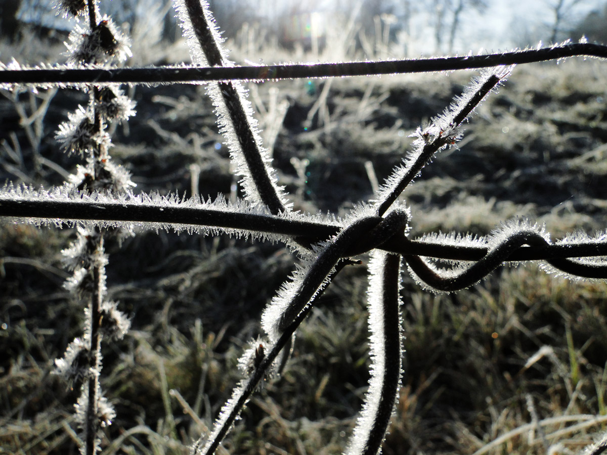 White frost on iron fence