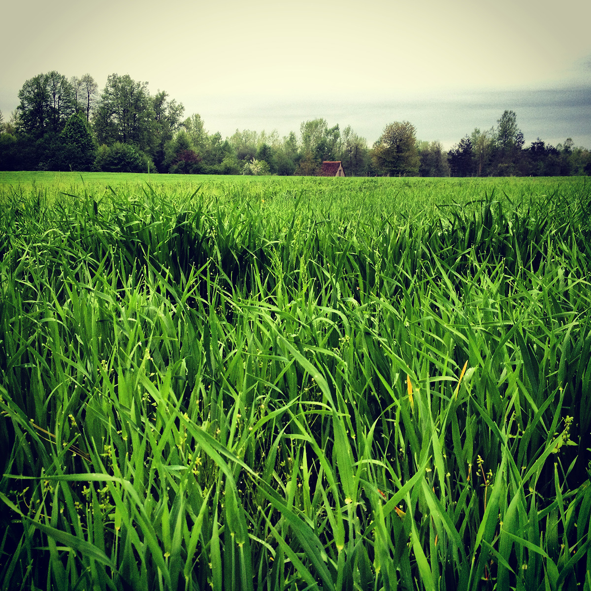 fields and grass - photo #19