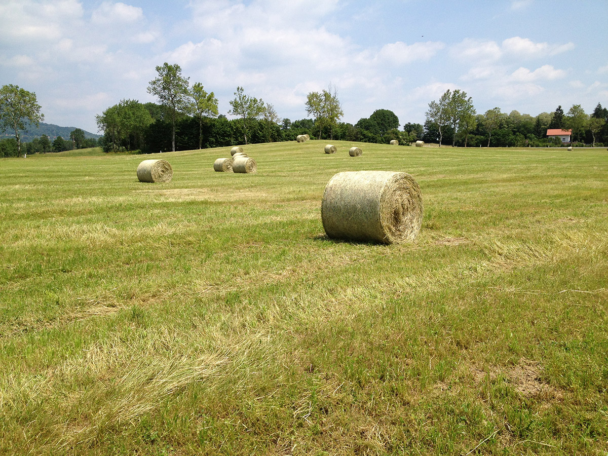 Daily Photo: Grass Field With Hay Bales (HDR) - PremiumCoding: https://premiumcoding.com/daily-photo-grass-field-hay-bales-hdr