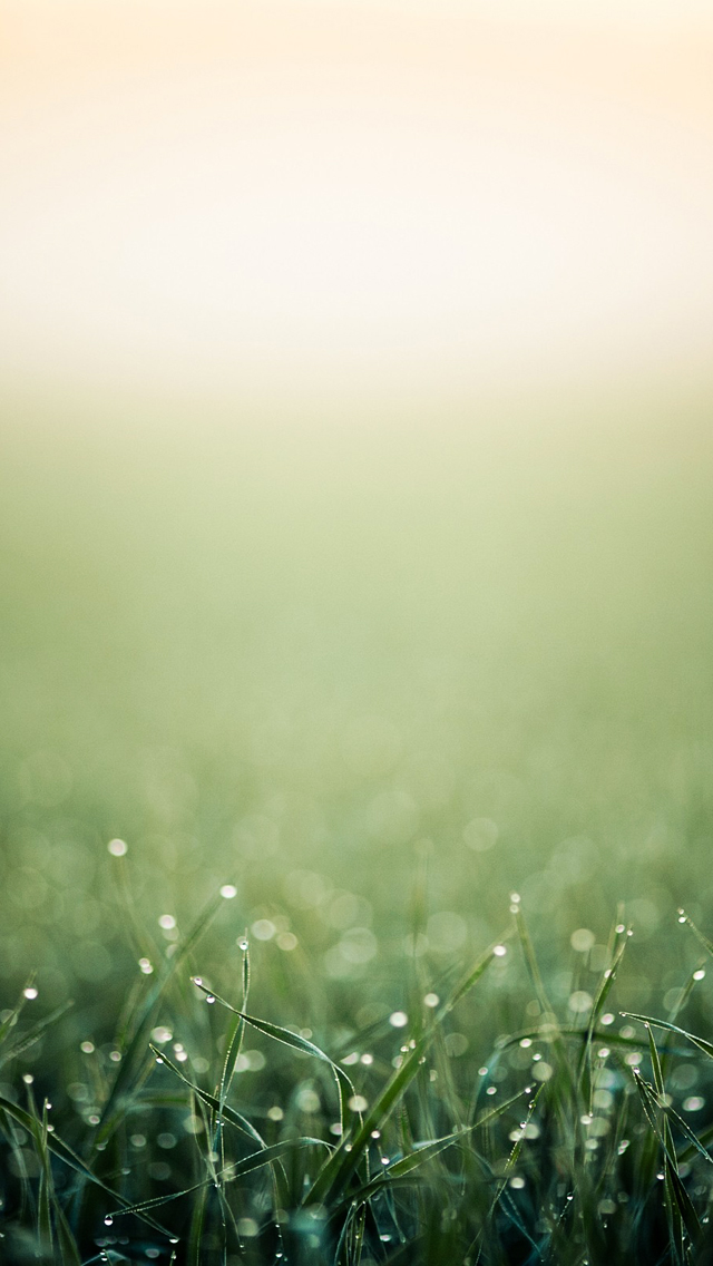 Green Grass Closeup iOS7 iPhone 5 Wallpaper