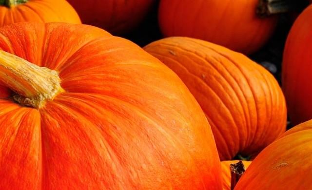 Autumn Pumpkins iPhone 5 Wallpaper