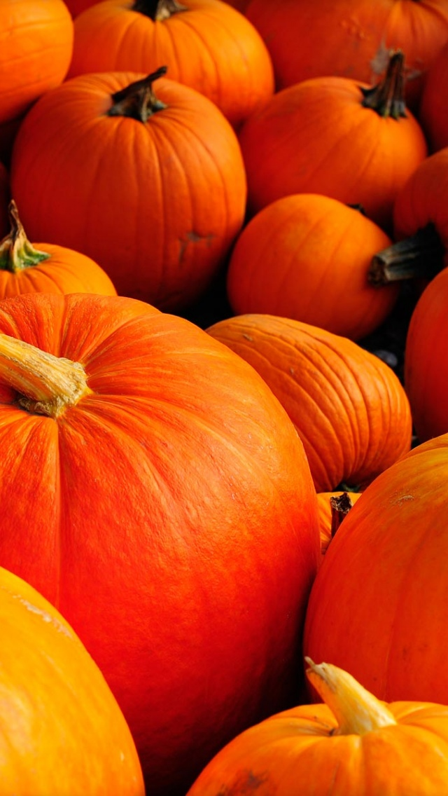 Autumn Pumpkins IPhone 5 Wallpaper