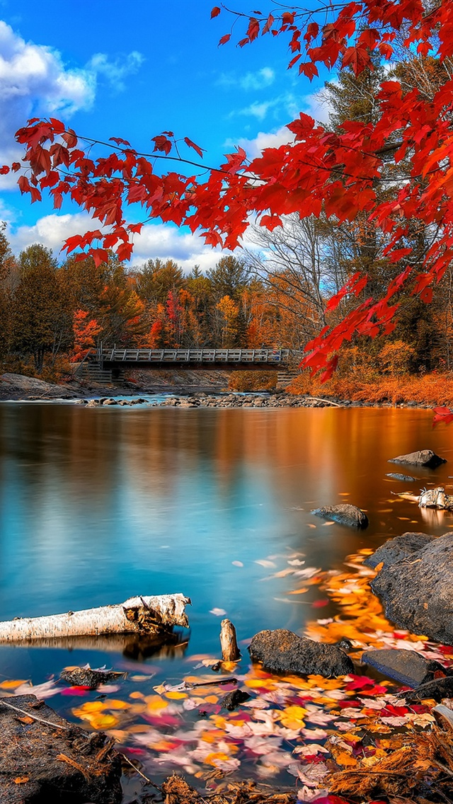 Wooden River Bridge Red Autumn Leaves iPhone 5 Wallpaper