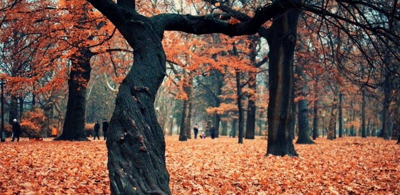 autumn_park_2-wallpaper-800x480