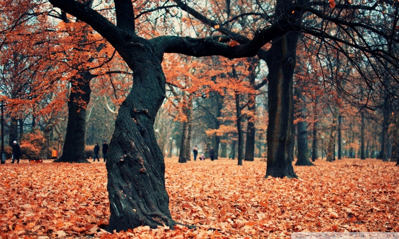 autumn_park_2-wallpaper-800x480