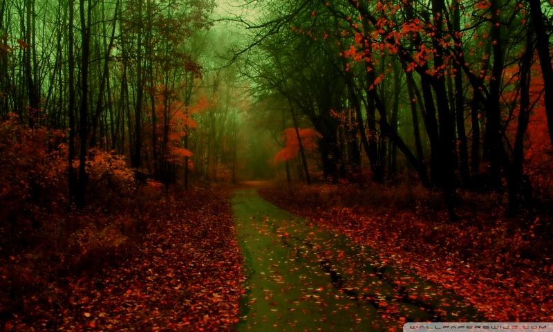 misty_autumn-wallpaper-800x480