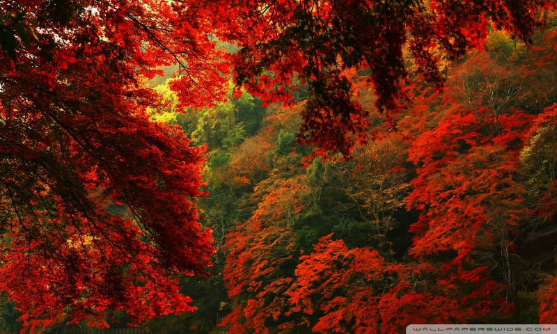 red_and_green_forest-wallpaper-800x480