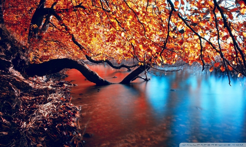 tree_branches_over_the_lake-wallpaper-800x480