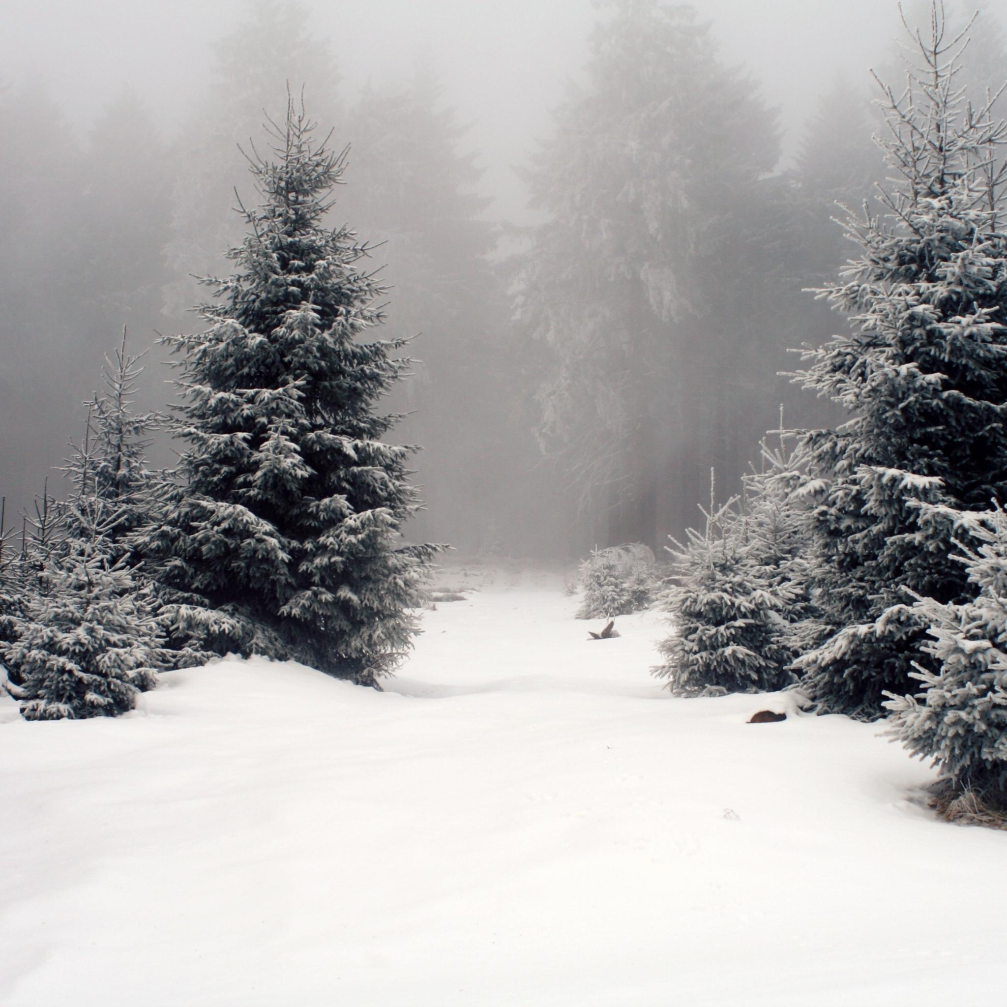 Winter Wallpaper: Free Winter IPad Wallpapers