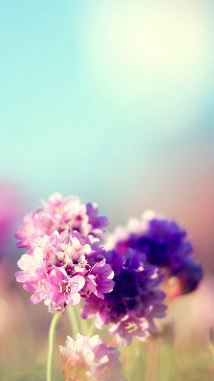 10 free sunny iphone wallpapers premiumcoding - Flower wallpaper for phone ...