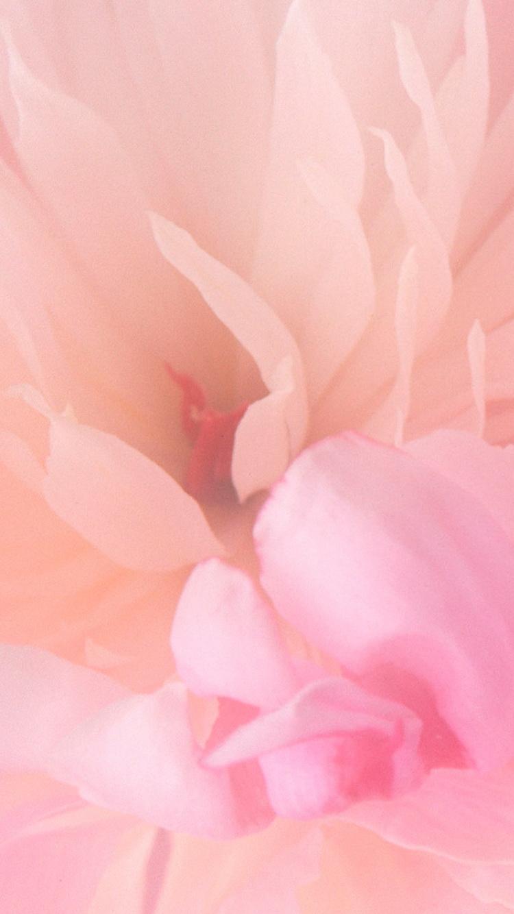 10 Free Spring Iphone Wallpapers Premiumcoding