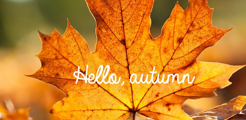 Freebie: Autumn Facebook Timelines