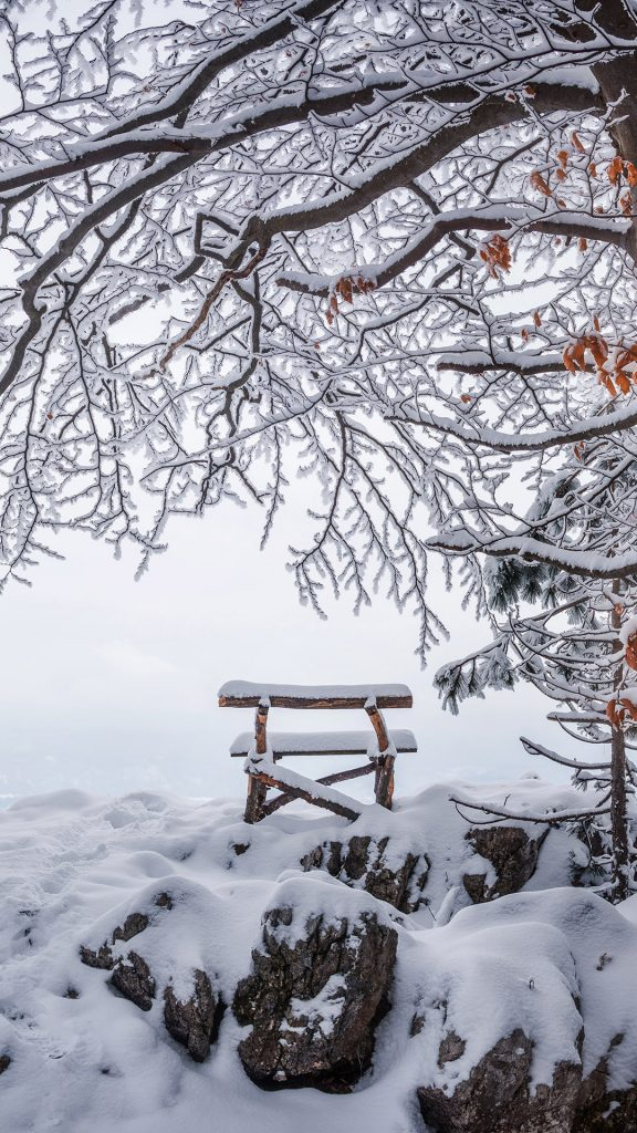 A Bench Under Snowy Trees IPhone Wallpaper