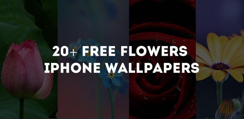 20+ Free Flowers iPhone Wallpapers