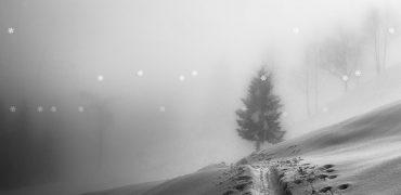 Falling Snow / Leaves Free WordPress Plugin